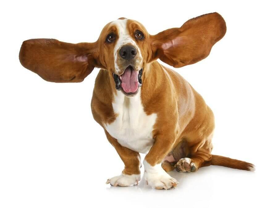[Artikel] Hoe je een stukje op gehoor kunt naspelen op je viool of altviool